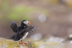 Scotland, Farne Islands